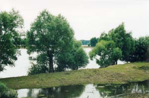 Remains of the Vistula flood in 2001
